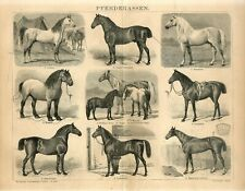 1882 HORSES HORSE BREEDS Antique Engraving Print Emil Volkers