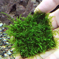 1/5/10PC Stainless Steel Wire Mesh Pad Aquarium Fish Tank Plants Moss Lovely Pad