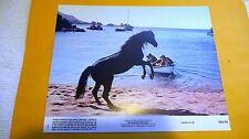 THE BLACK STALLION - US ORIGINAL LOBBY CARD - 1979 - Kelly Reno, Mickey Rooney