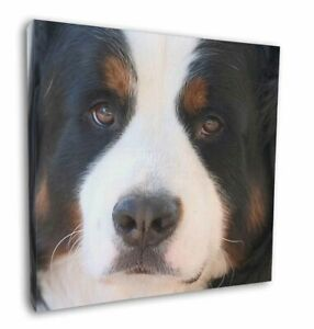 """Bernese Mountain Dog 12""""x12"""" Canvas Wall Art Picture Print, Breed AD-BER5-C12"""