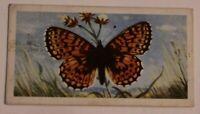 Victorian Trade Card British Butterflies London