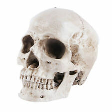 Life Size 1 1 Resin Human Skull Model Anatomical Medical Teaching Skeleton Head