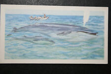 BLUE WHALE     Illustrated Card    VGC