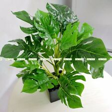 45cm Latex Artificial Evergreen Turtle Plant Tree No Vase Wedding Home Decor