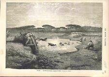 Italie Berger Lessive des Moutons Campagne de Rome Dessin Chifflart GRAVURE 1882