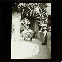 Attelage de Vaches Photo Vintage Plaque de Projection Lanterne Magique VR1L55