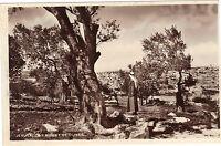Israël - cpa - JERUSALEM - Mount of olives