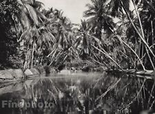 1928 Original INDIA Malabar Coast Coconut Groves Palm Canal Photo By HURLIMANN