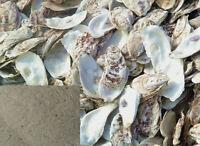 DR T&T 100g mu li / Oyster Shell / Concha Ostreae powder