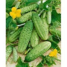 Cucumber- Boston Pickling - 25 Seeds - 50 % off sale