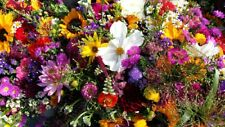 Blumenwiese 5m2 Samen Sommerwiese Blütenzauber Blumengarten Bienenweide