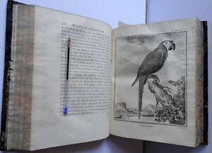 BUFFON HISTOIRE NATURELLE DES OISEAUX T 6 in 4 1779 EDITION ORIGINALE PERROQUETS