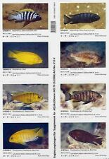 Supplements AQUALOG African Cichlids I Malawi I, Mbuna (Peel Back Stickers)