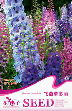 1 Pack 30 Rocket larkspur Seeds Consolida Ajacis Delbine Garden Flowers A231