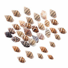 100x Small Mini Conch Shells Bulk Natural Beach Sea Jewellery Findings DIY Craft