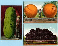 7 Orig 1910 MITCHELL EXAGGERATION Blackberry Lemon Oranges Cabbage Apple Pear
