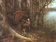Wild Turkeys, Owen Gromme