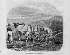 Stampa antica CONTADINO con ARATRO Paesi Baschi 1859 Grabado Antiguo Old Print