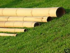 Bambusrohr - 25-28 mm 3 Meter - Bambusrohre Bambushalm Bambusstange Bonsai