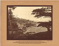 Antique Monterey Cypress Ocean Cliffs Martin Photo Gravure Print