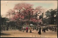 Kyoto JAPAN ~ Cherry Blossoms Maruyama Park ~ Hand Colored Postcard