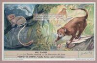 Crab Eating Macaque Java Tarsius Monkey Ape Primate Singes c60 Y/O Trade Ad Card