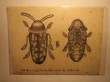 Der vergrößerte Holzwurm - Die Todtenuhr / Totenuhr / Druck 1829