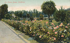 LA FRANCE ROSES, CALIFORNIA. CA. ROSE BUSHES/HEDGE.