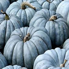 Ornamental Pumpkin Colorful Seeds Plants Cucurbita Pepo Organic 20pcs