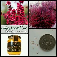 100+ MANUKA TEA TREE SEEDS (Leptospermum scoparium) Honey Myrtle Medicinal