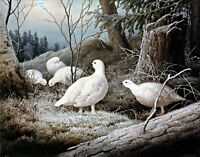 Ptarmigans by Finnish Ferdinand von Wright Bird Art Repro choose Canvas or Paper