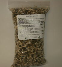 100 OZ  Moringa Organic Seeds - US Customs Cleared - Paisley Farm & Crafts