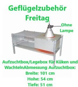 Aufzuchtbox/Legebox für Küken und Wachteln