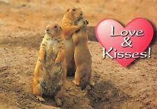Love & Kisses Prairie Dogs Vintage Postcard H03