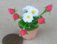 1:12 Scale 22cm Strip Of White Roses Tumdee Dolls House Flower Garden Accessory