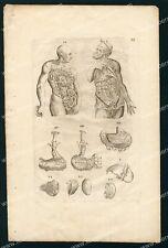 Medecine  Du Laurens Anatomie Système digestif - Gravure Planche Originale 17e