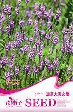 1 Pack 30 Verbena Seeds Verbena Hybrida Canadian Beauty Sakura Flowers A224