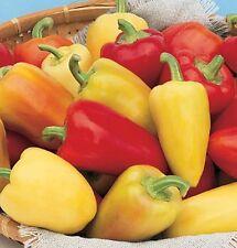 Ungarische ANTOHI ROMANIAN süsse Paprika, farbenfroh, reicher Ertrag, 10 Samen