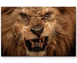 Leinwandbild Portrait eines brüllenden Löwen