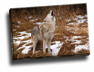 Howling Coyote, Montana Giclee Canvas Wild Life Picture Art