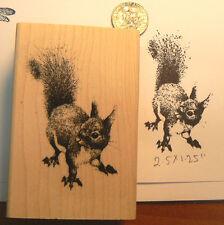 """P11 Squirrel rubber stamp WM 1.8x2.5"""""""