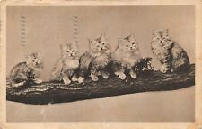 Long Haired Cats Kittens on a Branch Antique French Postcard C10