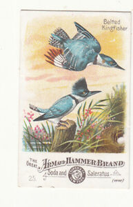 Arm & HAmmer Soda BELTED KINGFISHER Birds Church & Co Vict Card c1880s