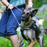Julius K9 Front Control Belt with D-Ring More Control of Your Dog if Pulling