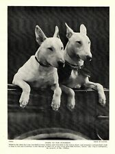1930s Antique Bull Terrier Dog Print Vintage Judington Bull Terriers 3203-C