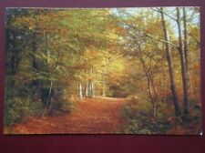 POSTCARD SUSSEX WASHINGTON - NATIONAL TRUST WOODS