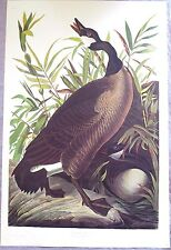 Audubon CANADA GOOSE Watermarked Color Lithograph #41 Plate 201 Amsterdam Ed '71