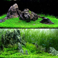 LIVE Aquarium Plant Seeds Glossostigma Aquatic Water Grass Foreground Fish
