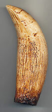 Well Detailed Sarcosuchus Tooth