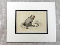 1853 Antico Stampa Fair Scimmia Primates Zoology Originale Vittoriano Art